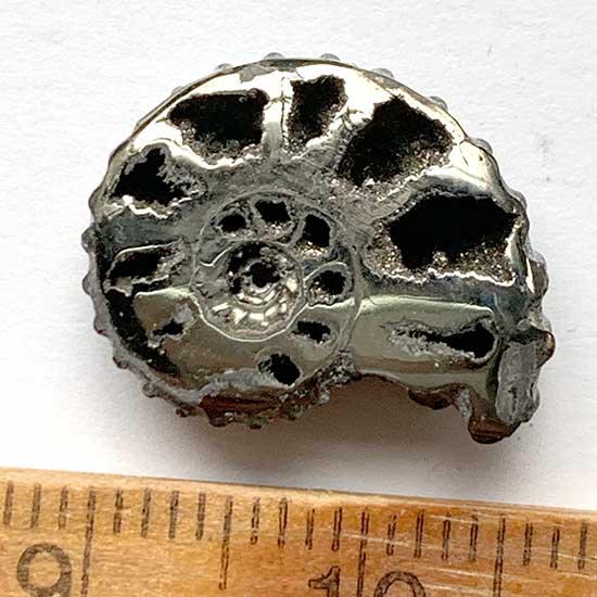 黄鉄鉱化したアンモナイト/きらら舎