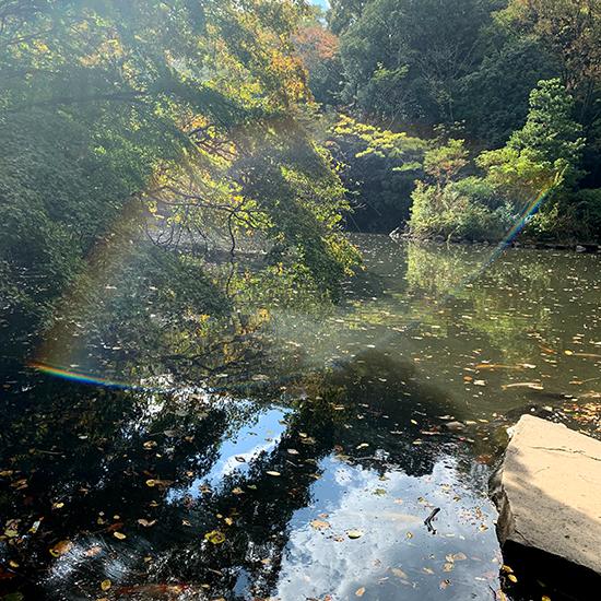 池の水採集/きらら舎