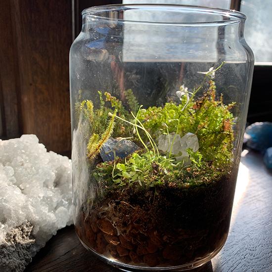 ウサギゴケ苔テラリウム/きらら舎