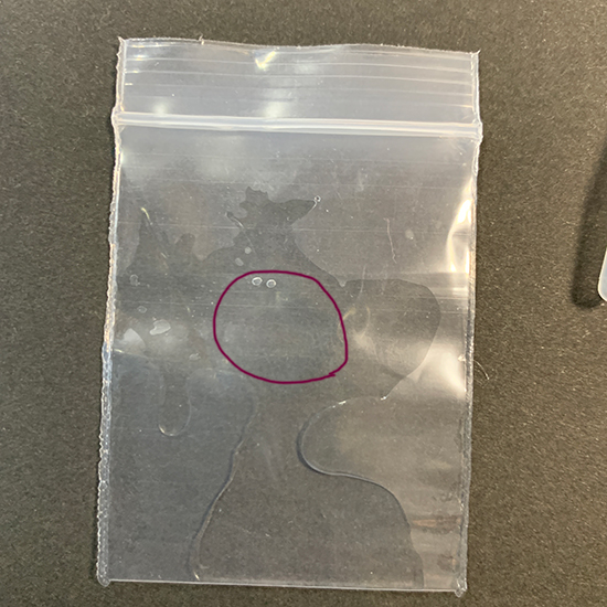 ウニ発生実験キット/きらら舎
