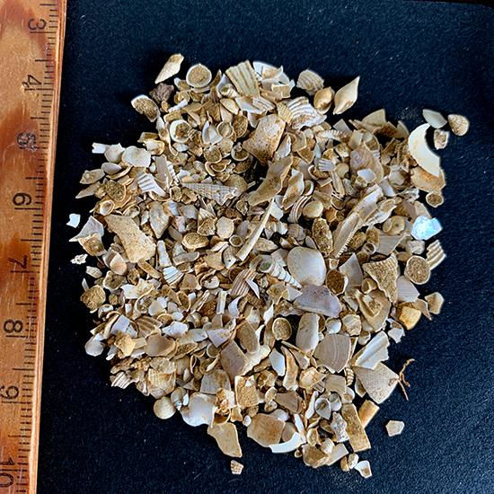 微化石/きらら舎