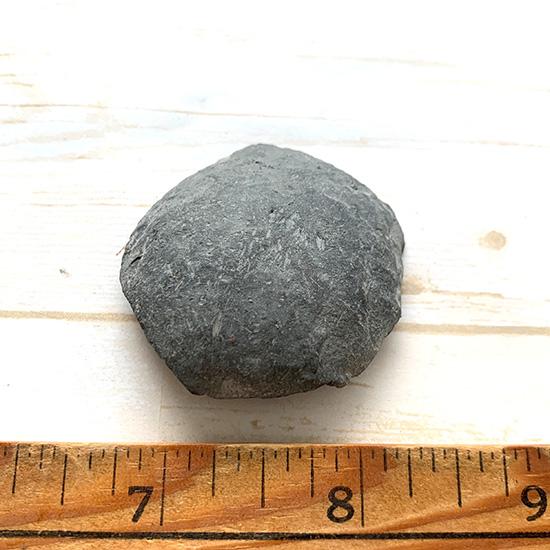 アンモナイトネガティブ化石/きらら舎